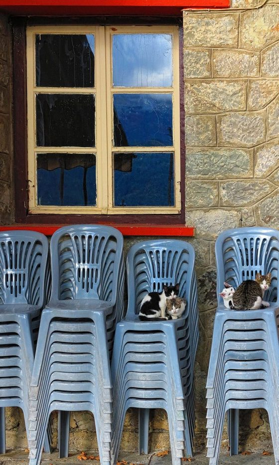 Cats chilling in Laista